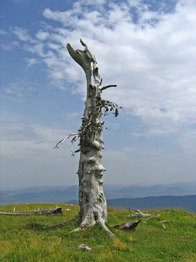 Lonely tree at the top of the mountain stock photography