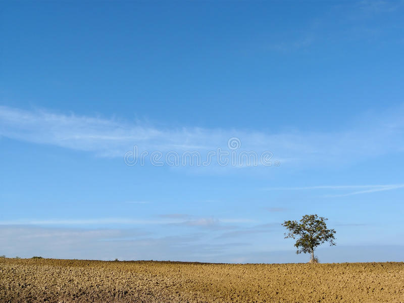 Lonely tree in Tuscany royalty free stock images