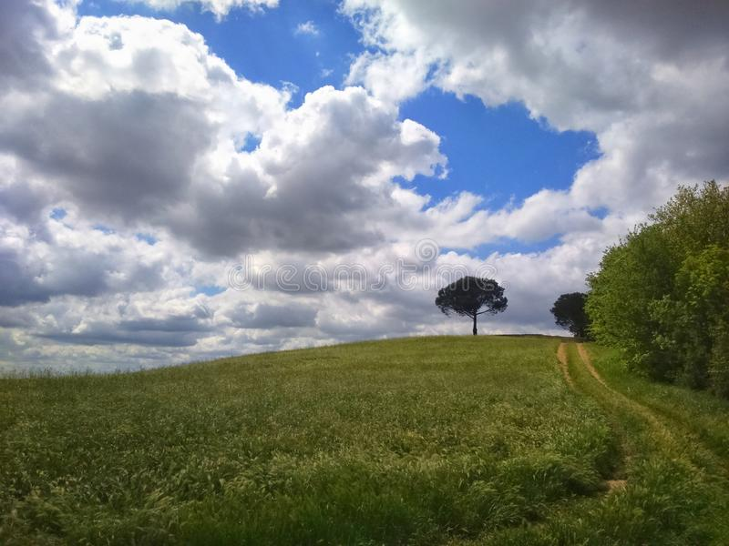 Lonely tree in a tuscany landscape with a wide cloudy sky stock images