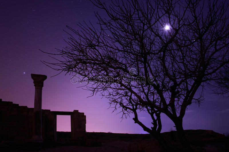 Lonely tree under blue night sky. With moon and stars stock image