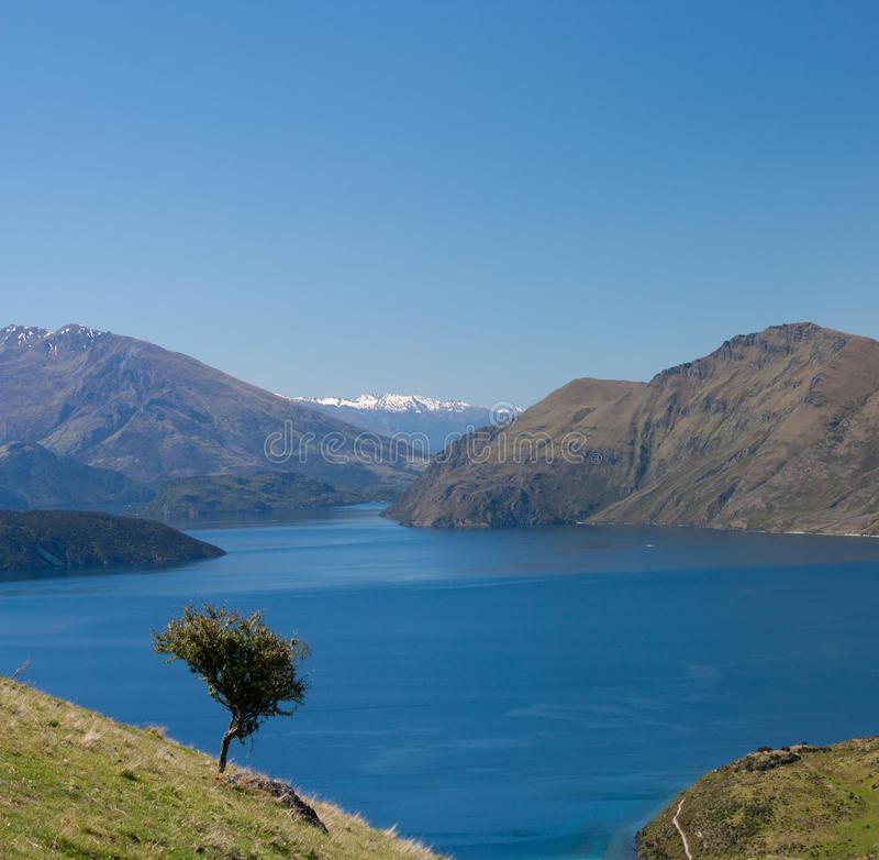 A lonely tree and the Wanaka lake in the distance near Roy's Peak in New Zealand stock photos