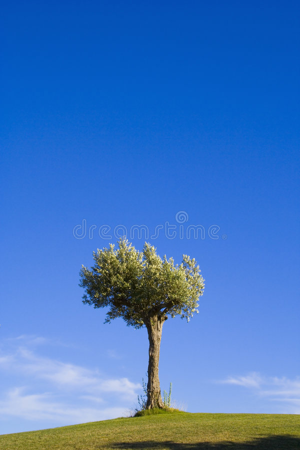Free Lonely Trees 15 Royalty Free Stock Image - 2842046
