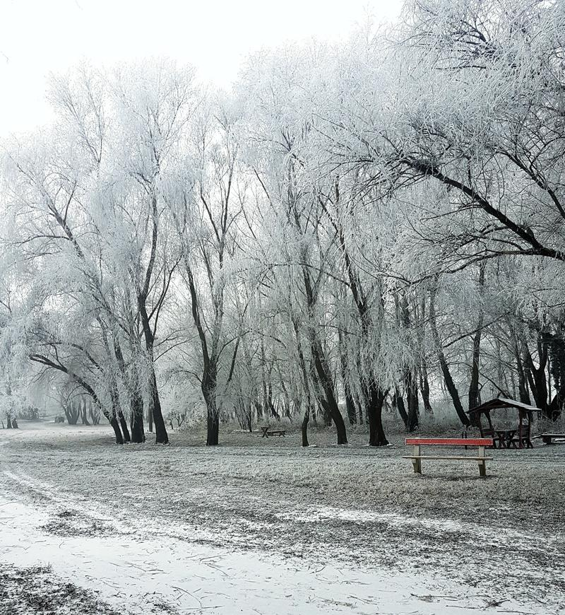 Download Lonely stock photo. Image of trees, lonely, winter, beautiful - 83716950