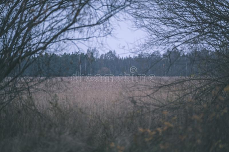 Lonely trees with last colored leaves in branches shortly before winter, dull autumn colors and empty park with tree trunks -. Vintage old film look royalty free stock images