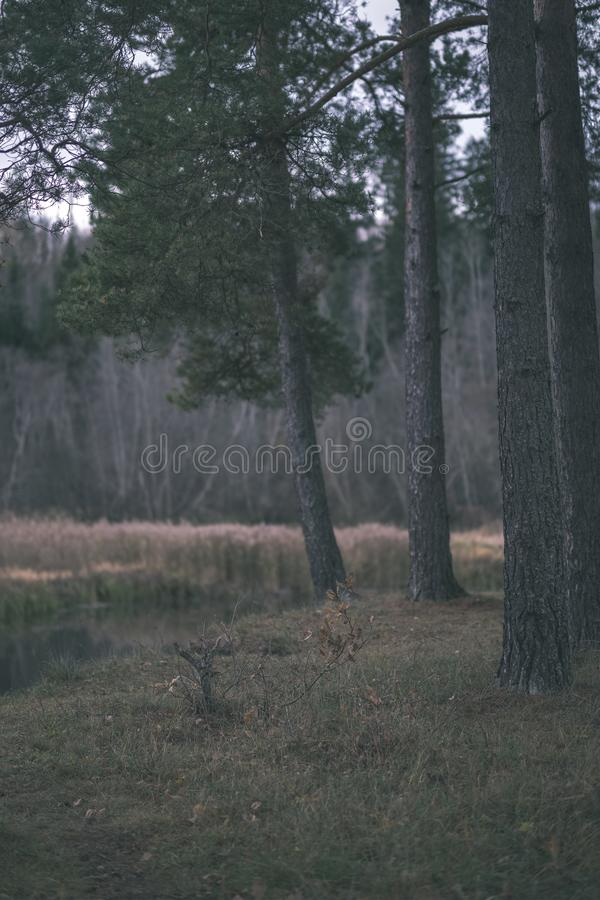 Lonely trees with last colored leaves in branches shortly before winter, dull autumn colors and empty park with tree trunks -. Vintage old film look royalty free stock image