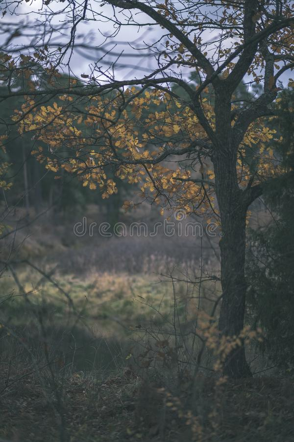 Lonely trees with last colored leaves in branches shortly before winter, dull autumn colors and empty park with tree trunks -. Vintage old film look stock photos