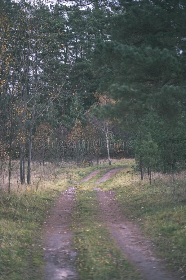 Lonely trees with last colored leaves in branches shortly before winter, dull autumn colors and empty park with tree trunks -. Vintage old film look stock photography