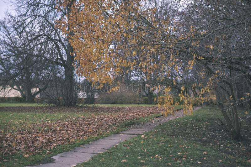 Lonely trees with last colored leaves in branches shortly before winter, dull autumn colors and empty park with tree trunks -. Vintage old film look stock images