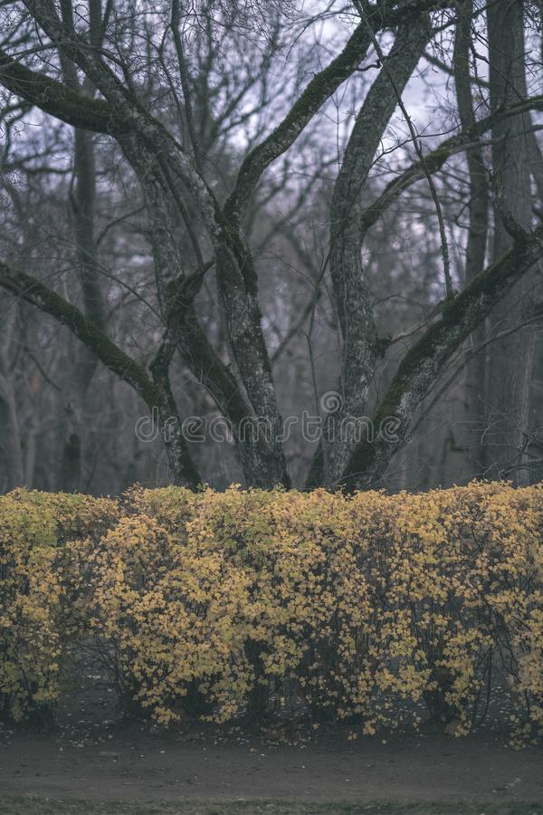 Lonely trees with last colored leaves in branches shortly before winter, dull autumn colors and empty park with tree trunks -. Vintage old film look royalty free stock photography