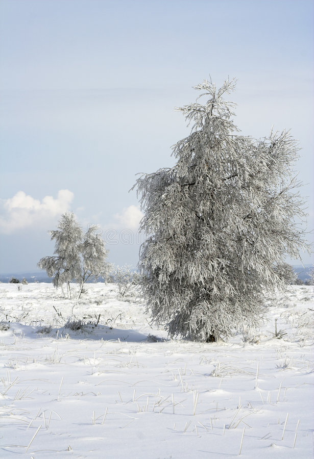 Download Lonely Trees On A Snowy Meadow Stock Image - Image: 515065