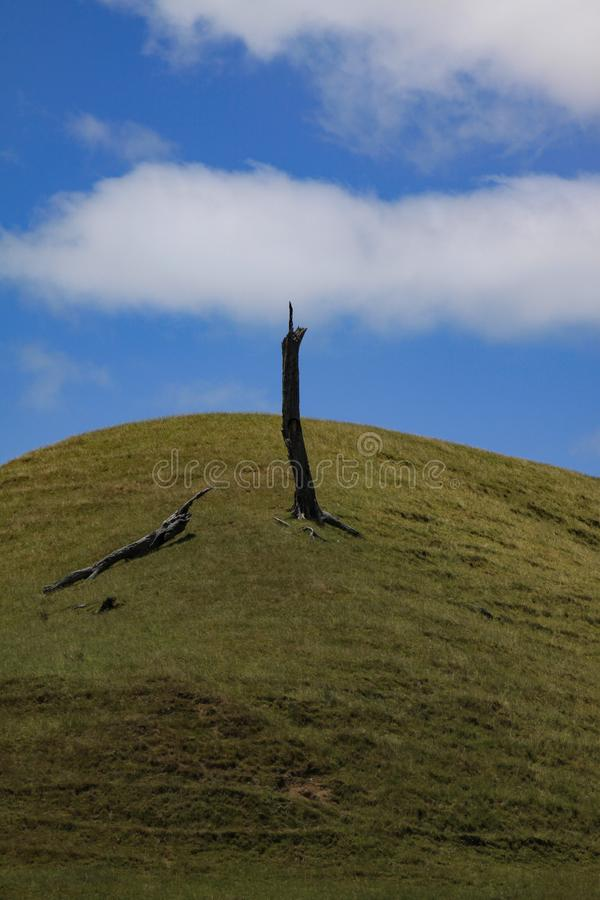 Lonely trunk. Surreal image of dried tree trunk standing alone on green hill stock image