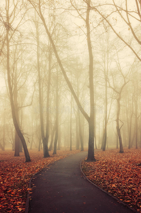 Download Lonely Walkway In The Autumn Deserted Park Foggy Weather Stock Image
