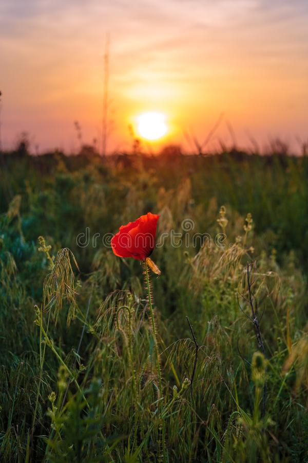 Red Poppy Flowers Backdrop Sunshine Navy Blue Sky Photography Background Natural Landscape Holiday Travel Wild Poppy Flower Field for Photo Studio Wedding Birthday Party Backdrop 10x7ft E00T9164