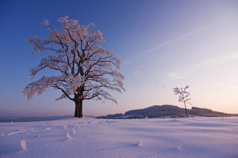 Download Lonely winter tree stock image. Image of grey, freeze - 24337907
