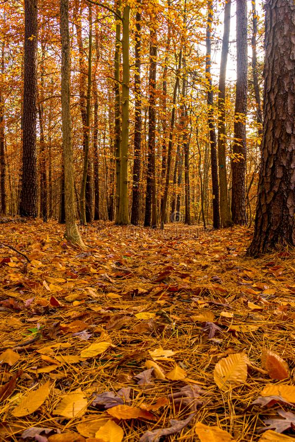Lonely Wooded Trail stock images