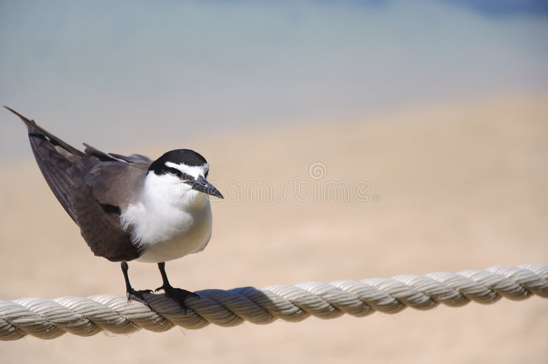 A Lonesome Bird royalty free stock image
