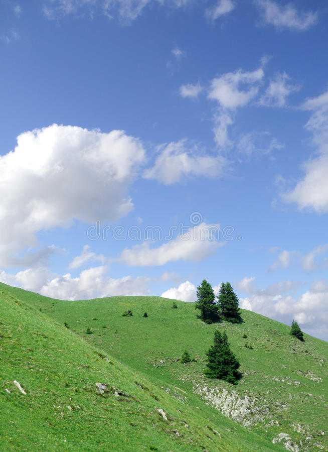 Download Lonesome firs stock photo. Image of hillside, hills, recreation - 25831780