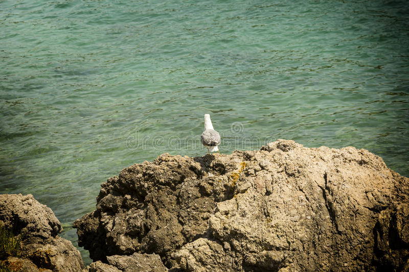 Lonesome seagull stock images