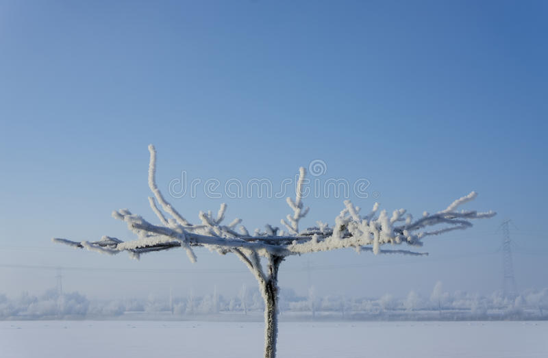 Lonesome tree. Frost covered tree shot against a horizon with frosted trees stock image