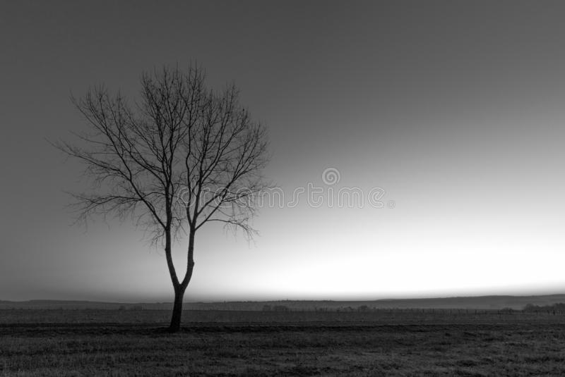The lonesome tree. Lonesome tree captured in the French countryside by a misty morning stock photo