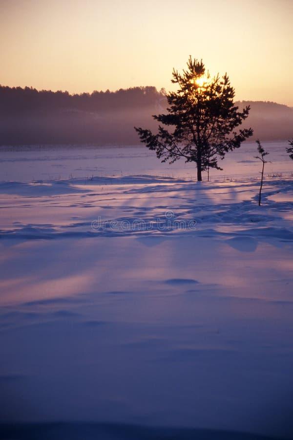 lonesome tree in winter stock photo