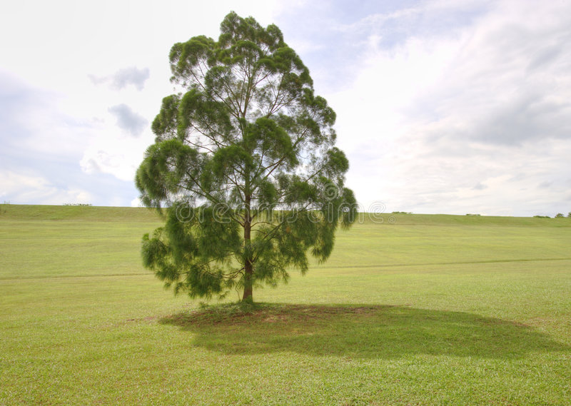 Loney Tree Stock Photography