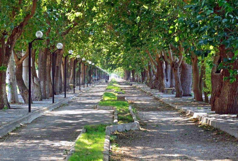 Long allee. Allee between Selcuk and Ephesus in Turkey stock photos