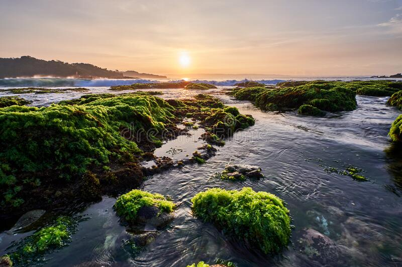 Long angle view of sunny morning over a rocky beach covered by green moss, Indonesia. Long angle view of sunny morning over a rocky beach covered by green moss royalty free stock image
