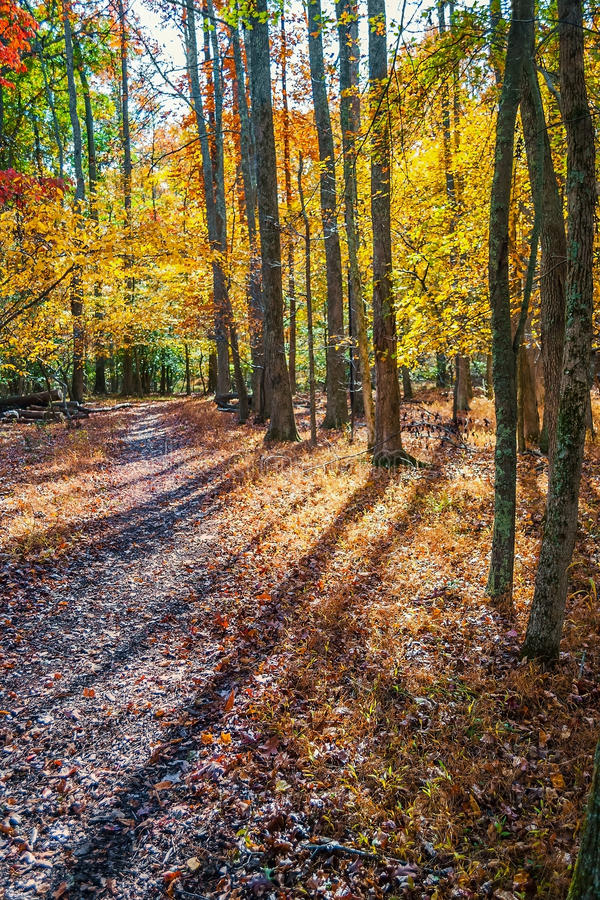Free Long Autumn Shadows Stock Photos - 89312773