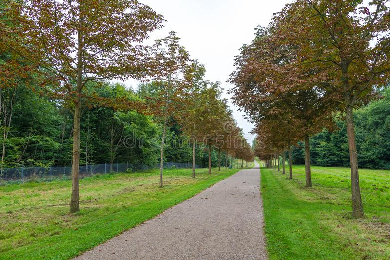 Long avenue in Palace gardens, Fredensborg, Denmark. Long avenue in Palace gardens. The largest historical gardens in the Baroque style, Fredensborg, Denmark stock photo