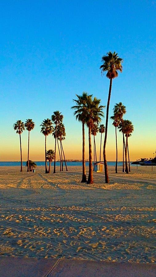Long Beach. CA Cali California sunset afternoon evening dusk twilight Palm tree sand sky beautiful gorgeous vacation travel west coast shore ocean royalty free stock photos