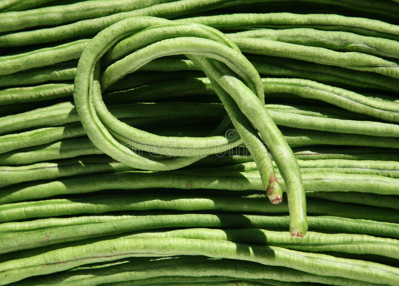 Long Bean. Fresh green long bean yummy to eat royalty free stock photos