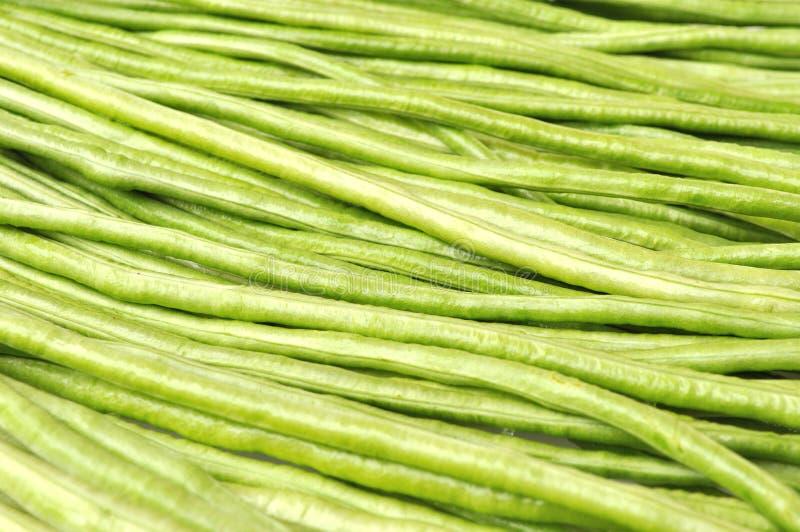 Long bean. Closeup of fresh green long bean stock images