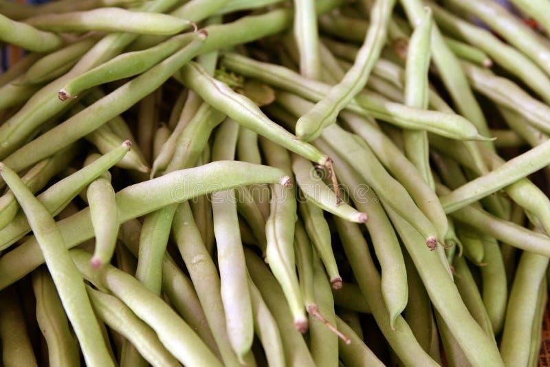 Long bean stock images