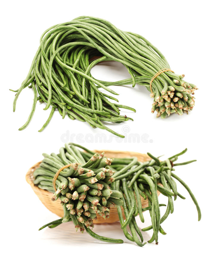Long beans. Bundle of long beans isolated on white background stock photography