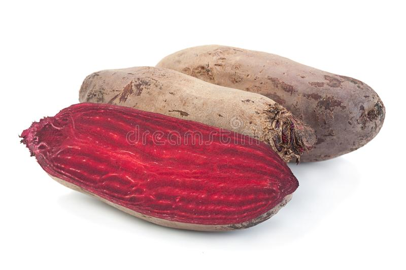 Long beet root vegetable on white. Long beet root vegetable closeup isolated on white stock image