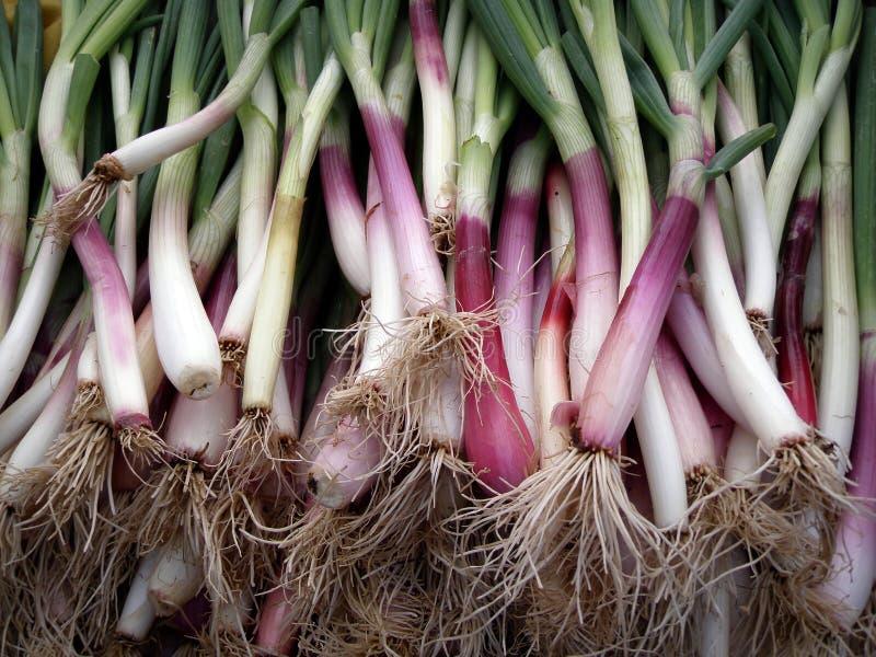 Long Big Organic Green Onions stock photo