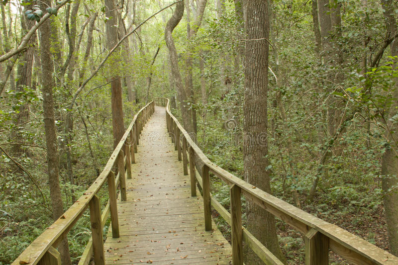Download Long Boardwalk Through A Forest Stock Photo - Image: 21155750