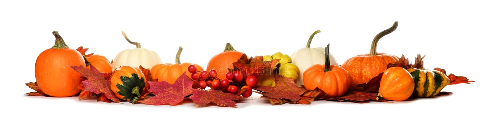 Long border of pumpkins, gourds and fall leaves on white stock photography