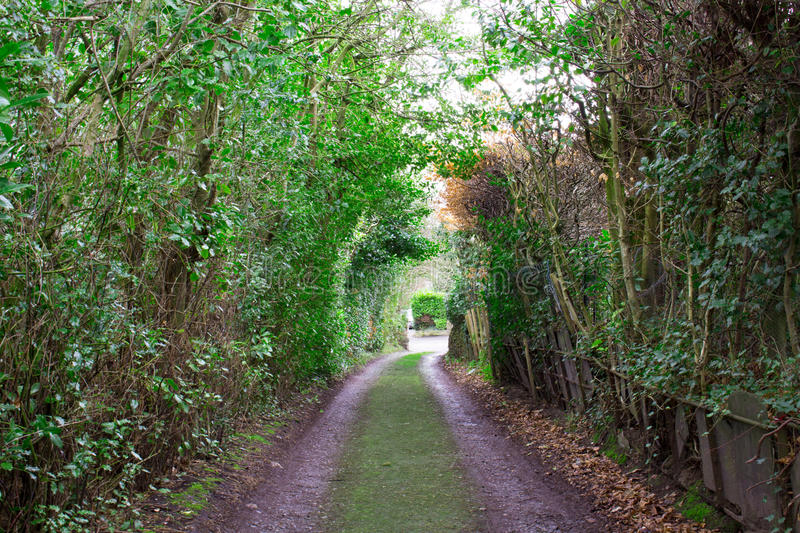 Long Colourful Detailed Overgrown Pathway. A Long Colourful Detailed Overgrown Pathway royalty free stock images