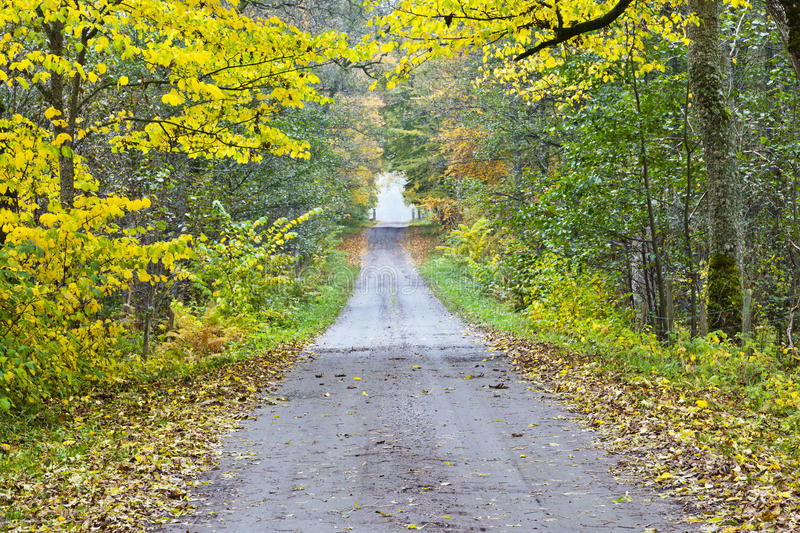 Long countryside road royalty free stock photo