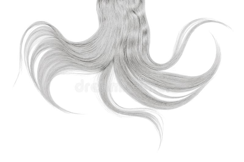 Long disheveled gray hair, isolated on white background. Natural healthy hair isolated on white background. Detailed clipart for your collages and illustrations royalty free stock photography