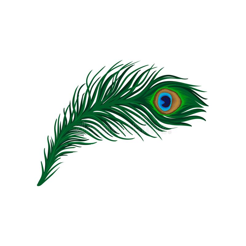 Long emerald-green feather of peacock. Plumage of beautiful wild bird. Detailed flat vector element for poster, book or royalty free illustration