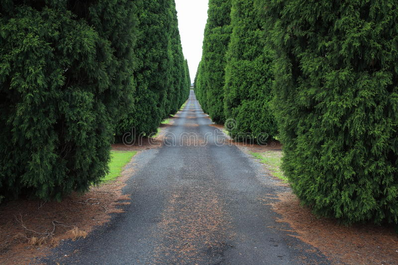 Long empty driveway to Australian farm stock images