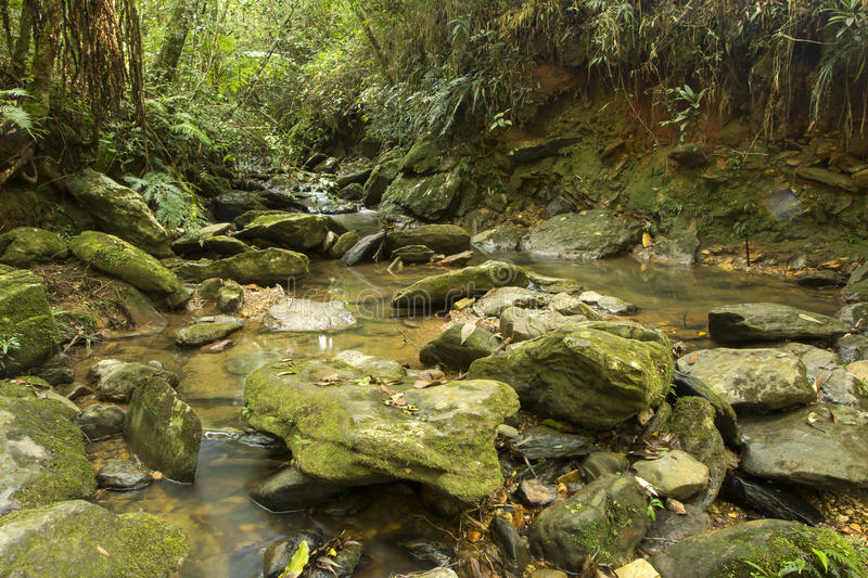 Long exposure creek with fallen leaves running among the rocks in the middle of a dense forest stock photos