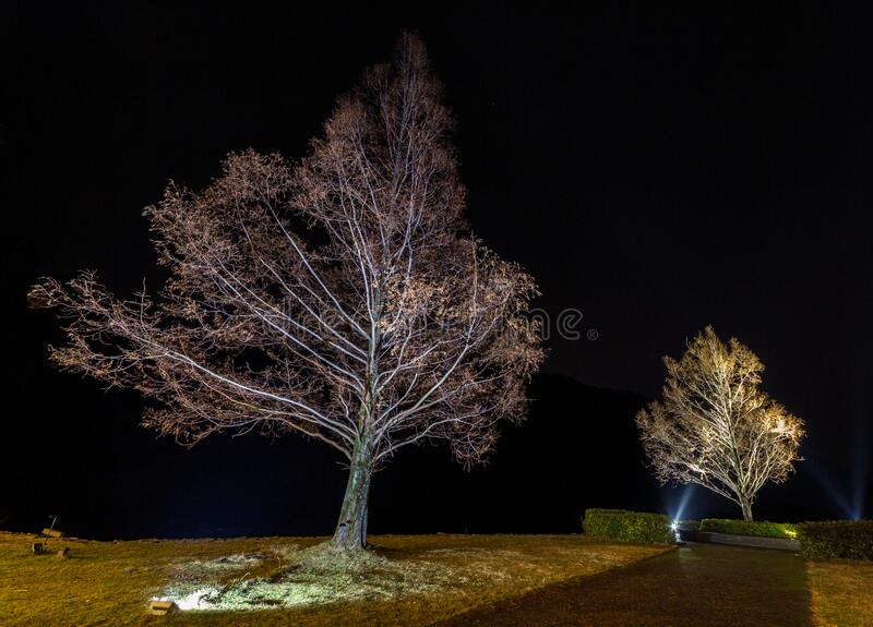 Long exposure image of trees illuminated at night, Lake Suigetsu, Fukui Prefecture, Japan. Long exposure image of two trees illuminated at night, Lake Suigetsu royalty free stock photo