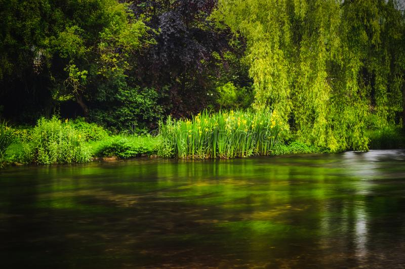 Lush green plants and trees growing along the river bank at Ashford-in-the-water in the Peak District National park. A long exposure of lush green plants and stock images