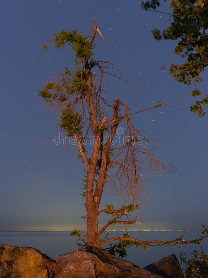A tree at the Lakeshore at early night royalty free stock photography