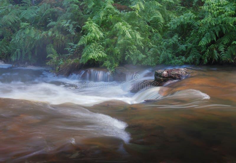Long exposure of stream in nature stock photos