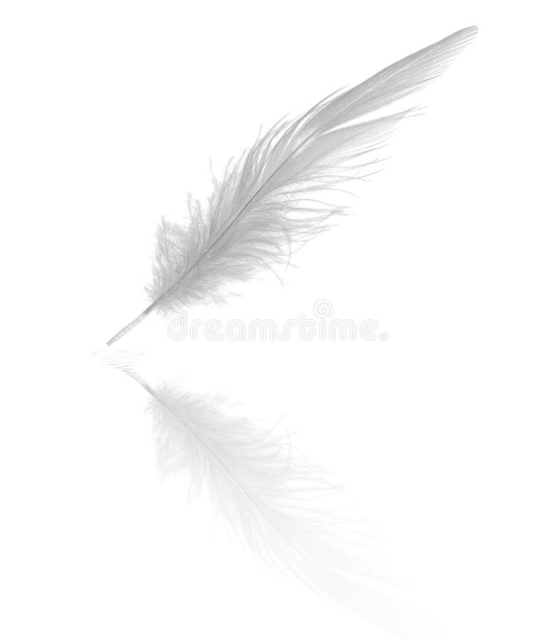 Free Long Feather With Reflection Royalty Free Stock Image - 10960956